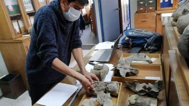 В Чили обнаружили новый вид динозавров