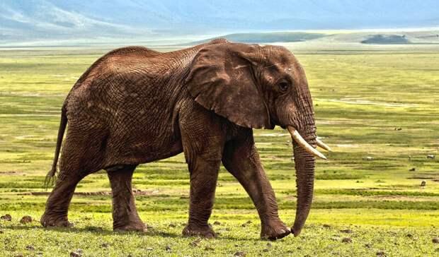 Подравшихся в казанском цирке слонов отправили на пенсию в Крым