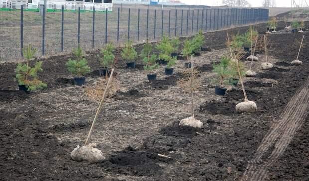 Навъезде вБелгород посадили 5,5 тысячи растений
