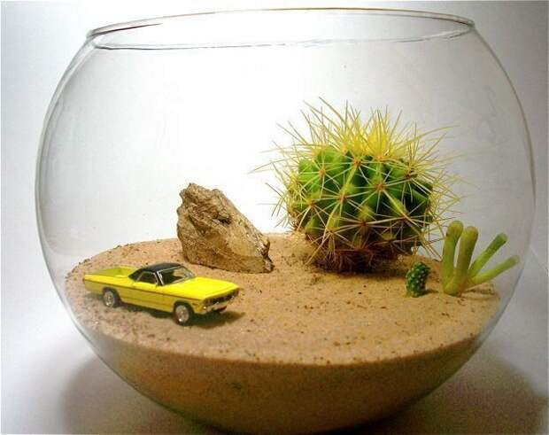 флорариум пустыня