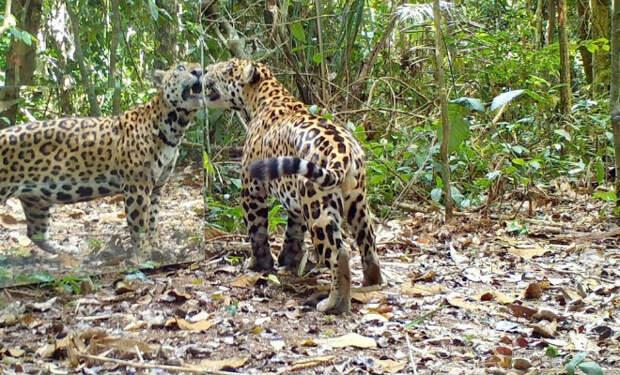Ученые поставили в лесу зеркало и стали снимать реакцию животных: видео