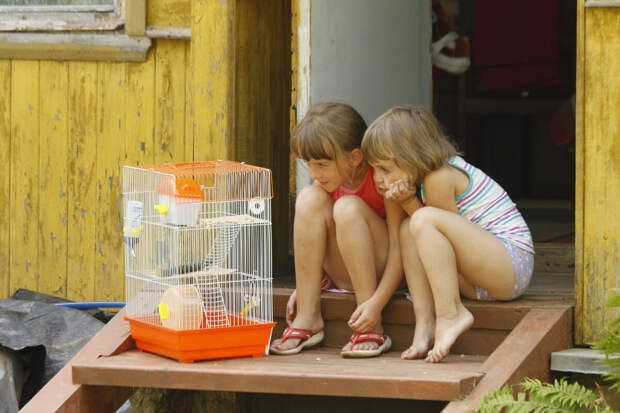 Девочки наблюдают за хомячком. Фото автра