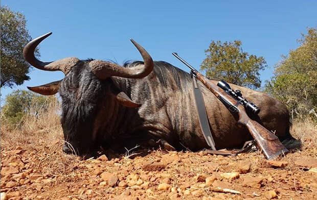 Дикий сон зоозащитников: В Америке состоялся ежегодный съезд охотников с трофеями