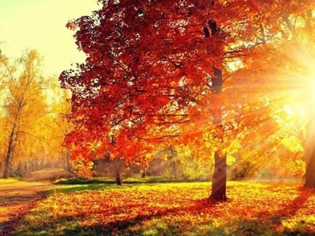 3 денежных обряда на день осеннего равноденствия