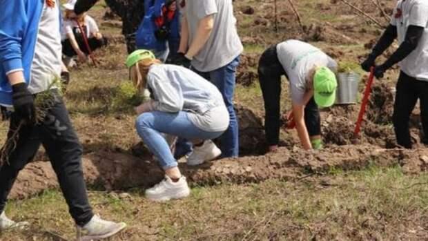"""Свыше восьми тысяч саженцев высадили в Бийске в рамках акции """"Сад памяти"""""""