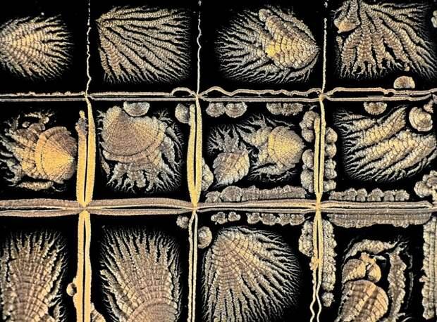 Мир под микроскопом: конкурс микрофотографии Королевского фотографического общества