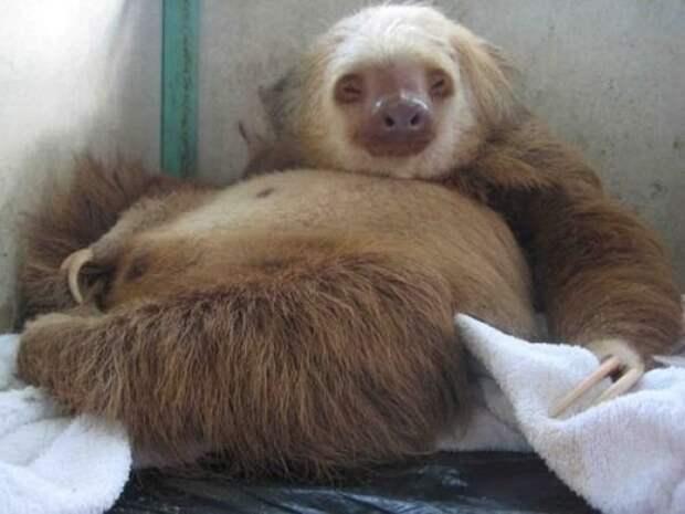 23 фото животных, которые вот-вот познают радость материнства