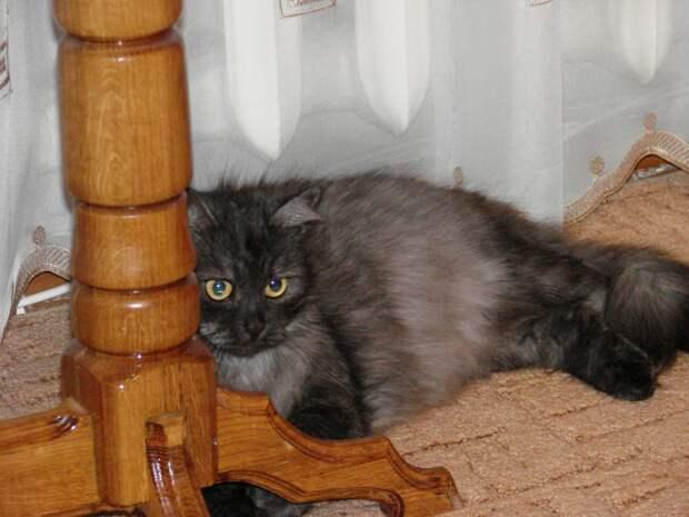 Бездомный, облезлый котенок, который ел вареные шкурки от свеклы, превратился в настоящую красавицу