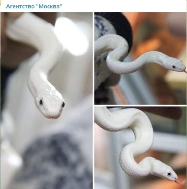 Раскрыта тайна появления белой змеи в квартире Митине