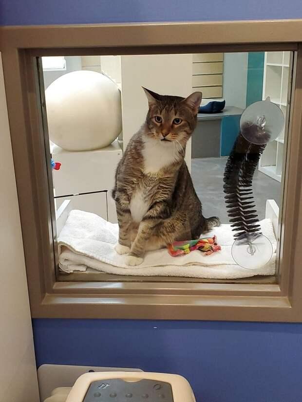 Кто-то хитро открыл двери приюта, и коты бросились врассыпную. Камера показала виновника беспорядка