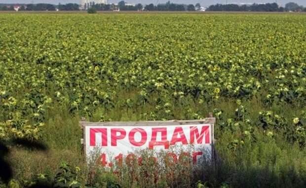 «Значит будут грабить»: земельная реформа убьет «украинскость» Украины