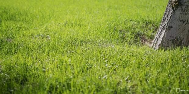 Коммунальщики засеяли газон на Ленинградке
