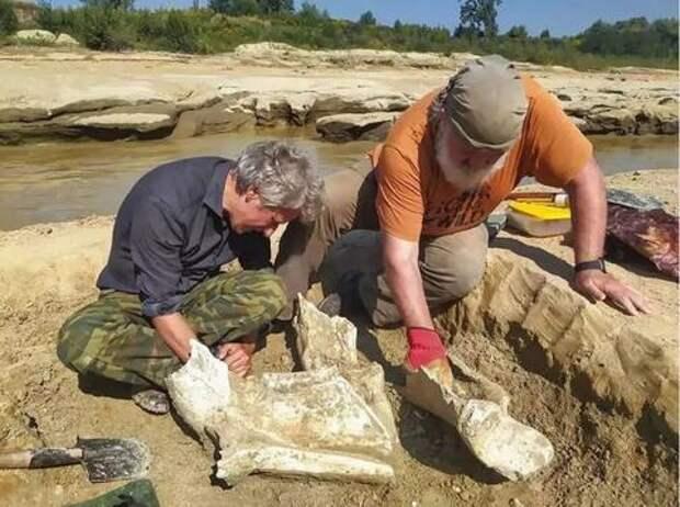 Ученые: на территории Кубани водились слоны и носороги