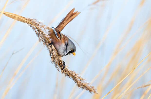 Лучшие фотографии птиц с конкурса Bird Photographer of the Year