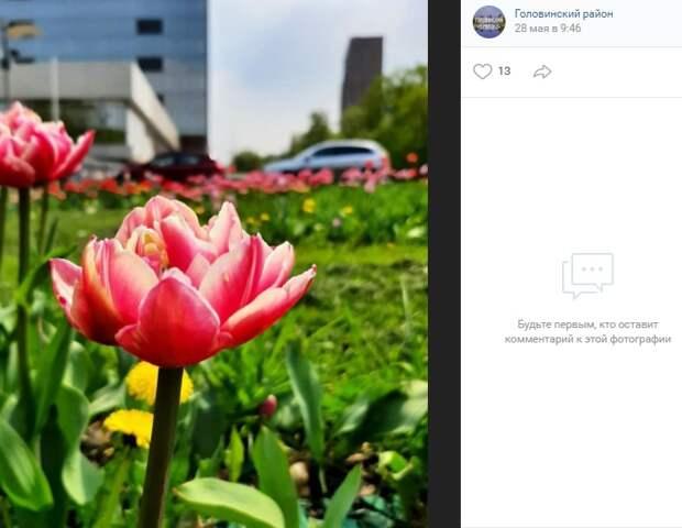 Фото дня: тюльпаны на Смольной еще цветут