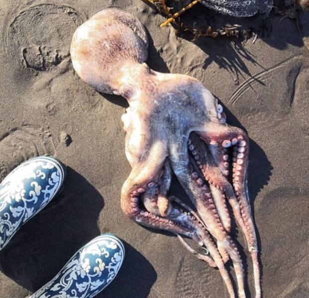 На Камчатке из-за возможного загрязнения воды на берег выбросились тысячи морских животных