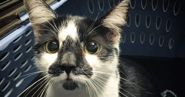 Одинока кошка бродила по стоянке… Мужчина долго ждал, чтобы помочь МУРлыке, еще не зная о ее беременности