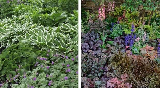 Многолетники с красивыми листьями: 10 лучших садовых культур