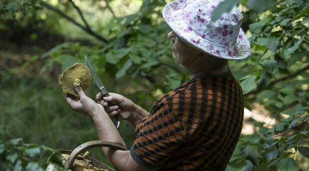 Что на самом деле ждет любителей собирать грибы и ягоды? Разъяснение Минприроды РФ