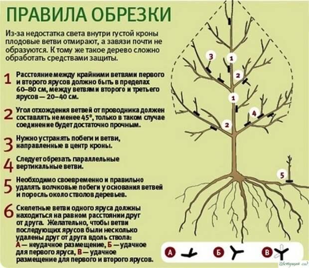Правила зимней обрезки плодовых деревьев