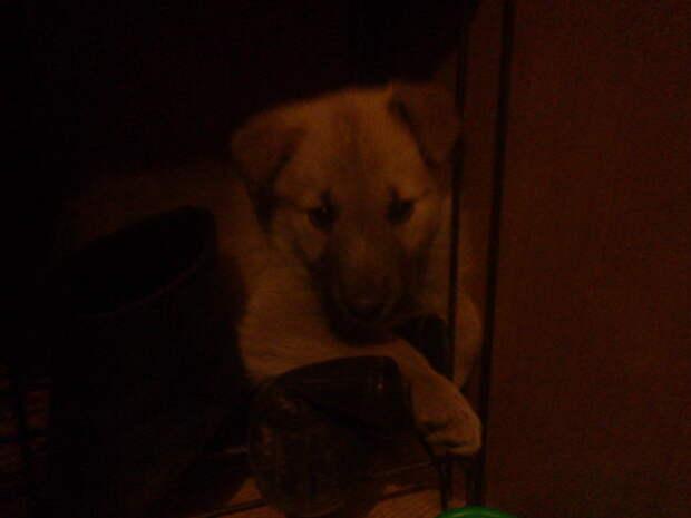 Напуганный и никому не верящий.. #находка, #собака, #спасение