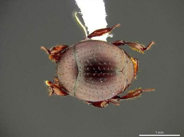 Они действительно существуют: членистоногие эндемики, которые очень похожи на вымысел (3 фото)
