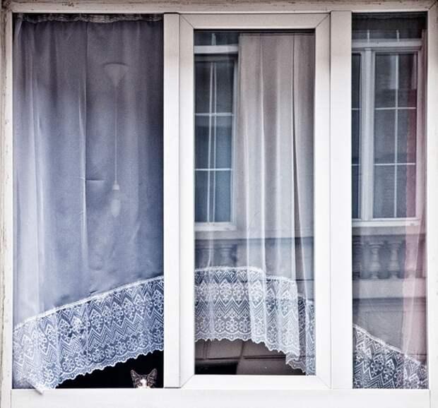 7240260-R3L8T8D-650-cat-waiting-window-40