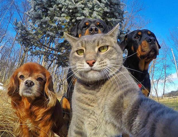 Прикольные автопортреты (то есть селфи) животных автопортреты, селфи зверей