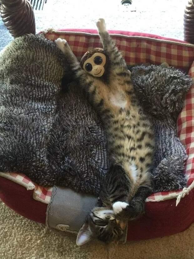 Показалось...прикольные снимки с котами котики, коты, приколы животные, приколы с котами
