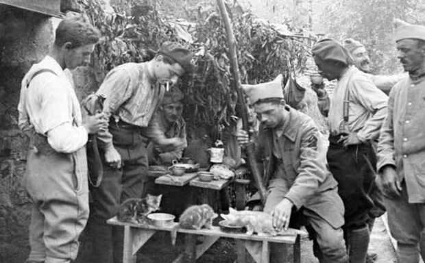 Боевые коты и кошки война, история, котики