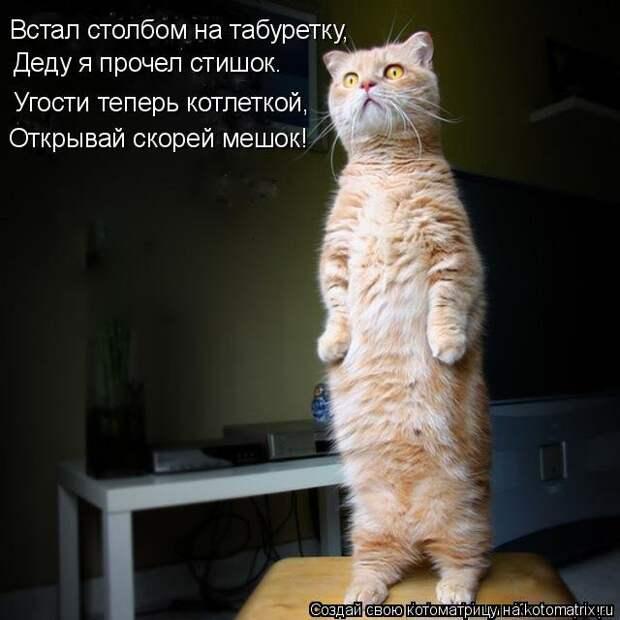 1451737612_kotomatricy-17
