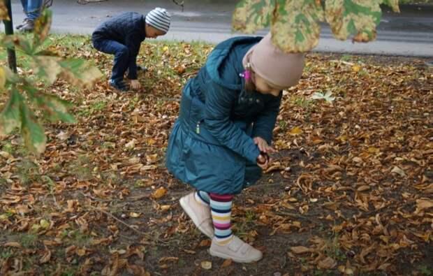 Каштановый день жители Выхина-Жулебина отметят в парке