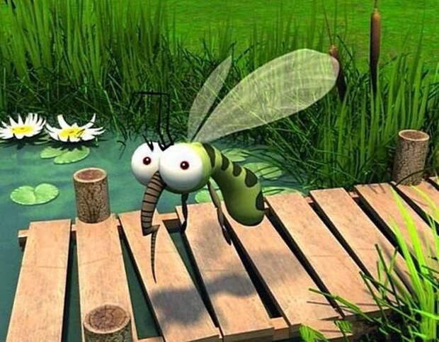 Растения, которые отгоняют комаров на ура
