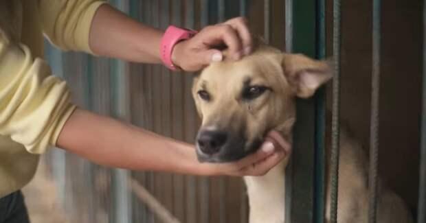 Pedigree запустил реалити-подкасты с Настей Задорожной об адаптации собаки из приюта в семье