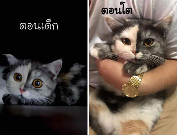 При первом взгляде на эту кошку, она кажется нарисованной из-за редчайшего природного эффекта