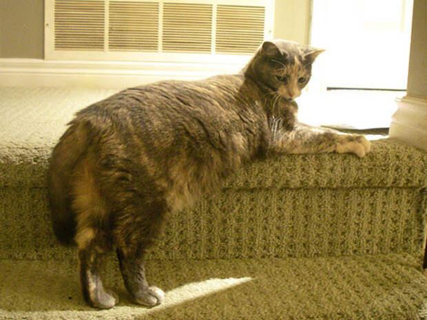 коты модели (6)