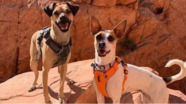Грустное событие подарило собаке шанс стать частью семьи