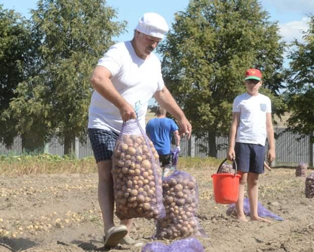 Посол Белоруссии: Брянская область обогнала нас по урожаю картофеля
