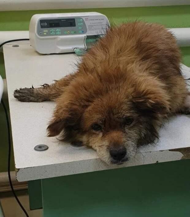 Несколько дней, отчаянно звал на помощь маленький старенький пёсик, который не мог вылезти из канавы