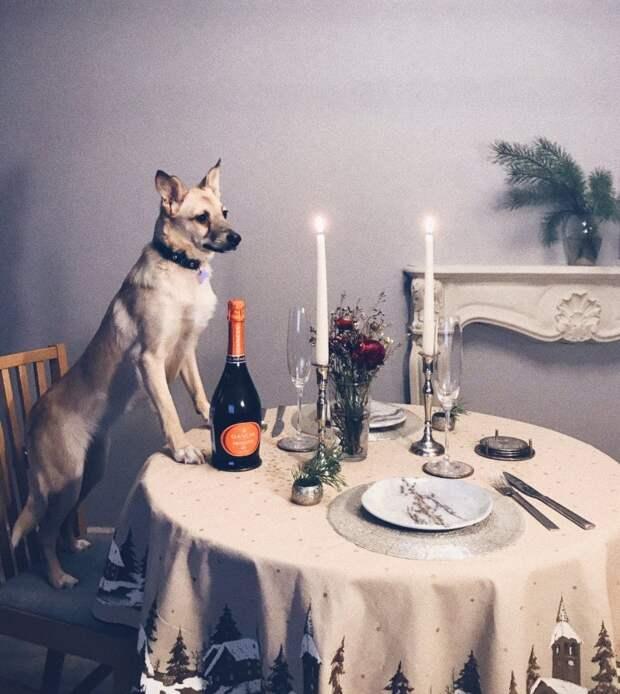 Теперь Беллу зовут малышка Ро животные, история, питомец, приют, собака, фото