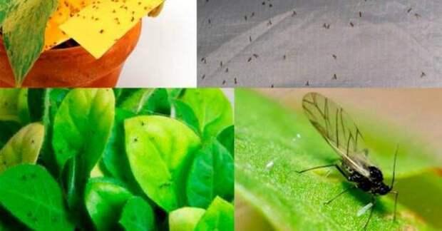 Толковый цветовод знает, для чего втыкать спички в горшки с растениями