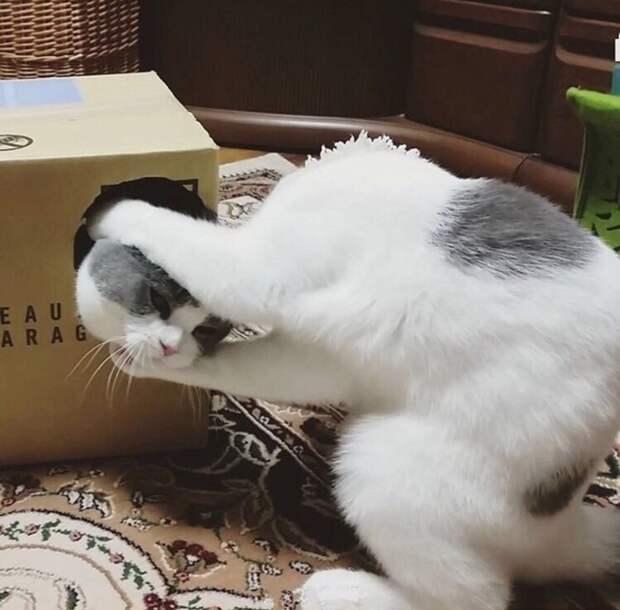Фокусник котики, коты, приколы животные, приколы с котами
