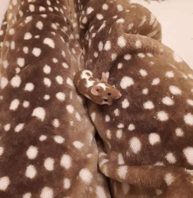 15 зверушек, которые буквально созданы для маскировки в доме