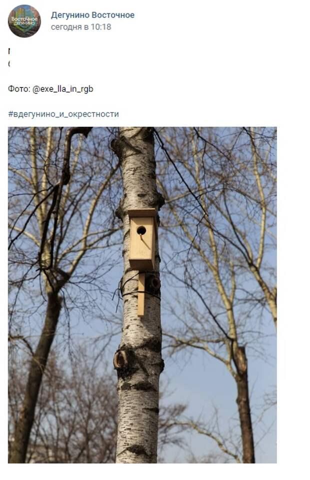 Фото дня: «Птичья жилая площадь» на улице 800-лети Москвы