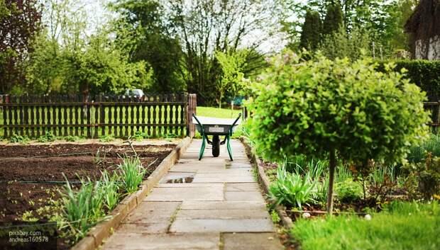 Перечислены советы, которые помогут оформить садовый участок