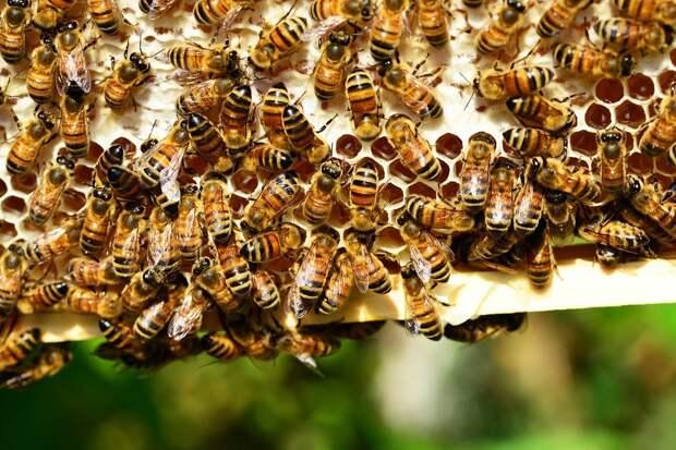 Предпринимателя оштрафовали за массовую гибель пчёл в Алнашском районе