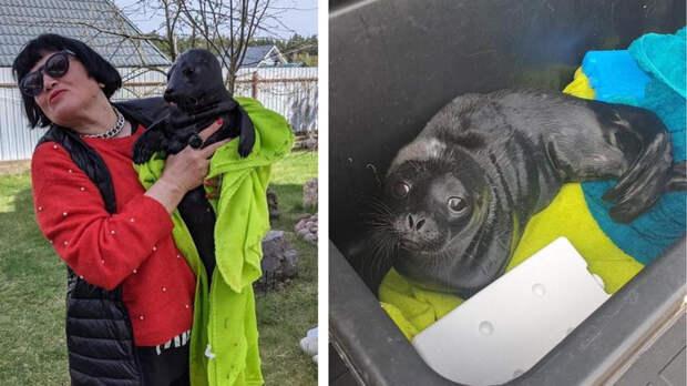 Двух детенышей нерпы спасли под Петербургом