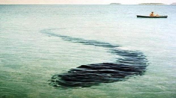 Морской монстр острова Крюк Роберт Ле Серрек лицом к лицу столкнулся с монстром летом 1964 года. Во время развлекательной прогулки на недавно купленном катере Ле Серрек заметил странную фигуру, держащуюся у поверхности воды. Он решил спустить с борта фонарь и увидел змея невероятных размеров. Просто чудо, что катеру удалось вырваться из этих мест!
