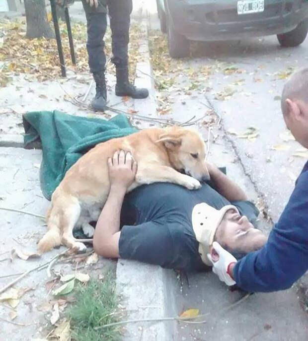 Верный пес не оставил хозяина, получившего травму