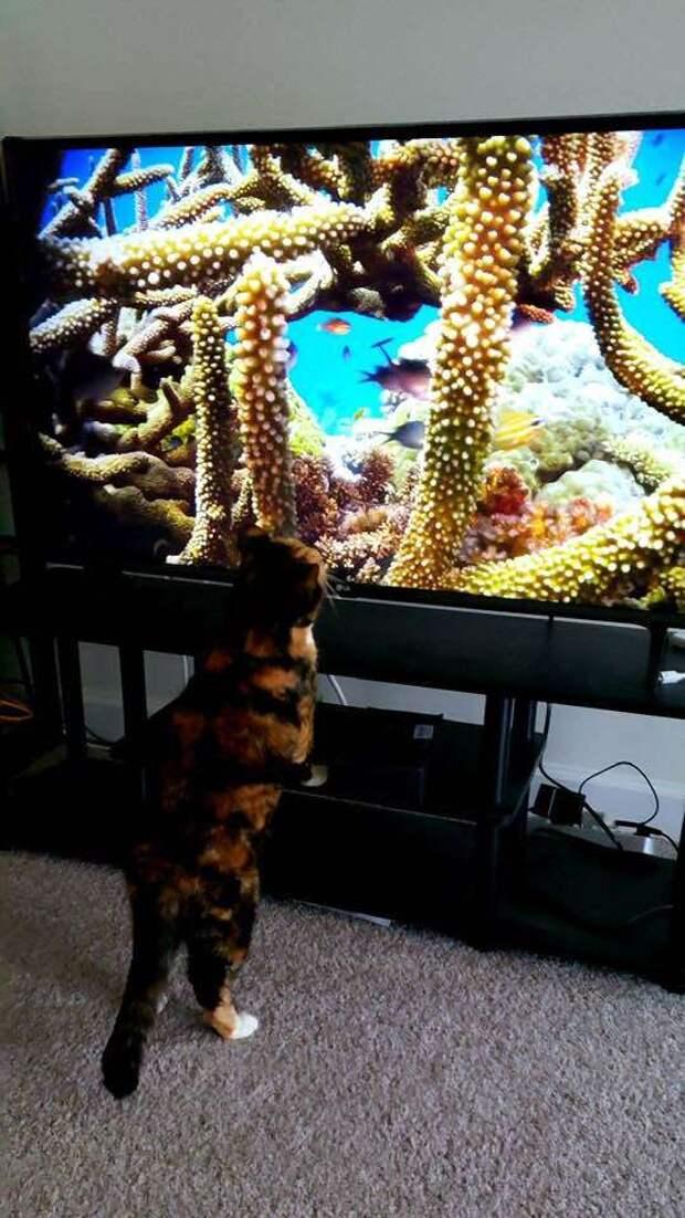 кошка возле телевизора
